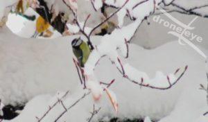 Cartolina da Cuneo: dicembre