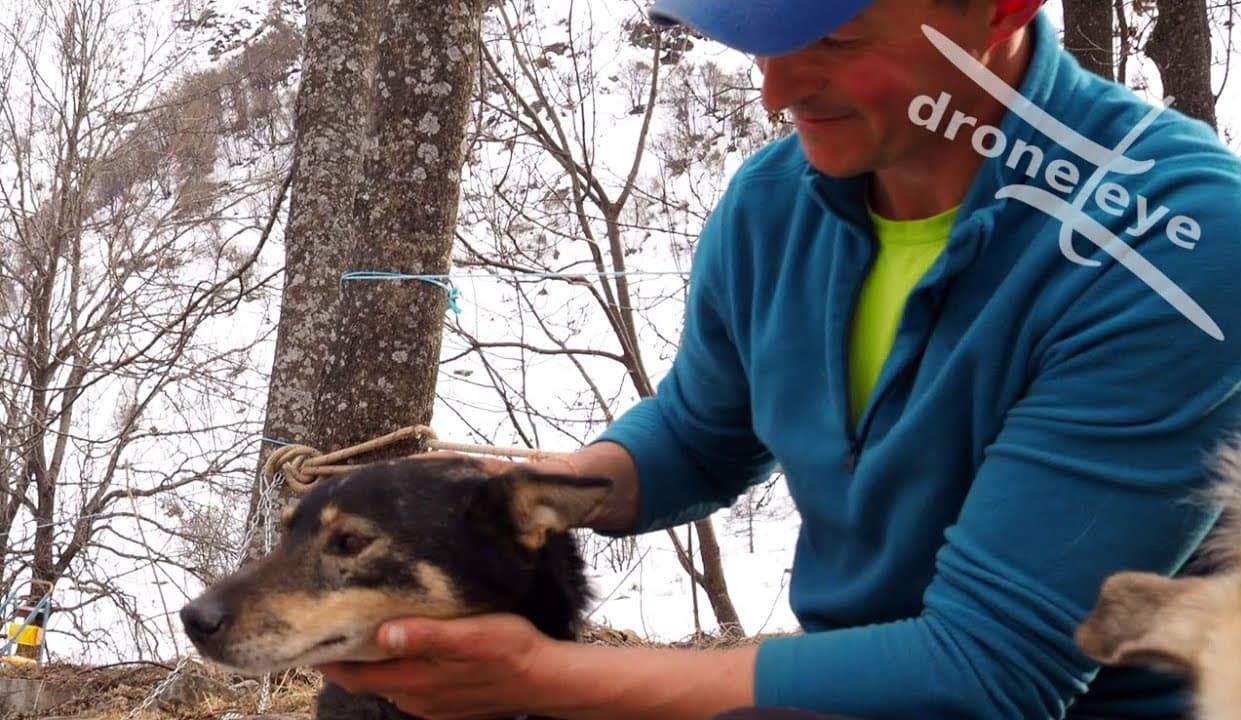 Sled Dog Stories: Marley
