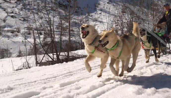 Sled Dog, Centro Fondo Gravieres – Castemlagno