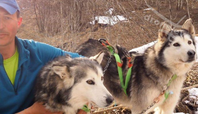 Sled Dog Stories: Kuna e Tanana